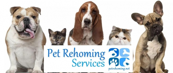 PET-REHOMING-REHOME-A-PET-PETS-FOR-REHOMING